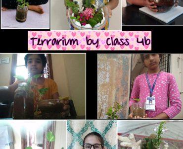 Terrarium - 4 B